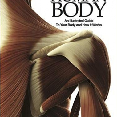 The Human Body: An Illustrated Guide To Your Body And How It Works